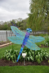 JIM_2615 (James J. Novotny) Tags: dragonflies sculptures sculpture d750 nikon rotarygarden rotarybotanicalgardens gardens garden gardenbotanical unlimitedphotos unlimiedphotos unlimited art artwork