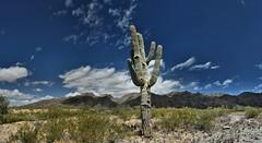 Old Timer (gbloniarz1925) Tags: nature desert arizona plant cacti saguaro clouds sky