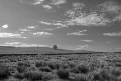 SheepCountry (Tony Tooth) Tags: nikon d7100 sigma 1750mm tree lonetree marsh field bw blackandwhite monochrome wincle cheshire england