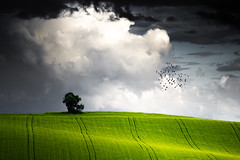 Italian Landscape (emanuelezallocco) Tags: landscape clouds birds italy spring strom sunlight photography hills fields nature