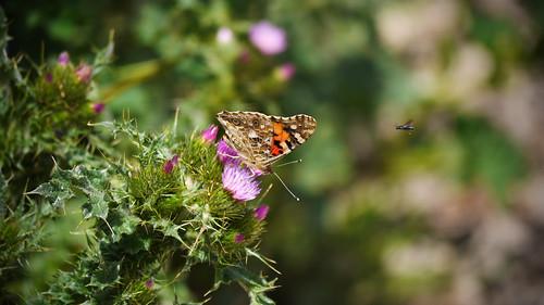 190414_vlinder
