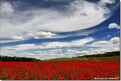 Amapolas en el Júcar (Antonio Zamora) Tags: antoniozamora red rojo flor flower paisaje paisajes primavera poppy poppies photoshop fall castillalamancha clouds casasimarro cielo canon colors colores colour color colours spain sky spring skies sol españa eos7d eos landscape landscapes llano llanura lamancha nubes nube nature weather blue blanco beautifull azul white amapola amapolas poppie