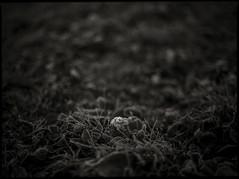 early spring #13 (moonchild1111) Tags: kodaktmax100 mamiya645 mamiyasekorc80mmf19 monochrome noiretblanc 645