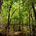 Do You Want to Visit Nature (Congaree National Park)