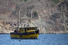Fish Hunters (yyzgvi) Tags: brown pelican fishing boat nohemi iii san juan del sur nicaragua dulce