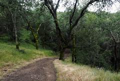 Mayfair Ranch Trail (LeftCoastKenny) Tags: ranchocañadadeloro trees moss brush gass path trail