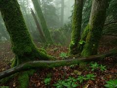 Ambiance humide dans le Bois de la Côte en Velet - Salins les Bains - Jura (francky25) Tags: ambiance humide dans le bois de la côte en velet salins les bains jura printemps franchecomté pluie brume