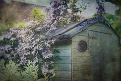 The Garden Shed (judy dean) Tags: judydean 2019 garden lensbaby texture ps shed clematis