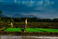 Be Proud of your Success #images #flickr #photography #paddy #philippines (jagmocjaynaph) Tags: images flickr photography paddy philippines
