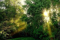 Morning in the forest (prokhorov.victor) Tags: лес природа утро солнце восход деревья пейзаж