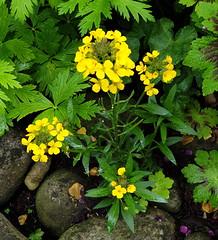 2019 Germany // Unser Garten - Our garden // im Mai // (maerzbecher-Deutschland zu Fuss) Tags: garten natur deutschland germany maerzbecher garden mai unsergarten 2019