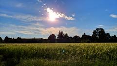 Campo (andrealamalfa) Tags: natura nature cielo sky nuvole clouds sole sun alberi trees campo field