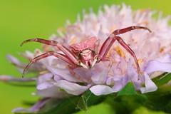 IMG_0010 (Ondřej Michálek) Tags: spider