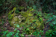 La roca que sudaba (SantiMB.Photos) Tags: 2blog 2tumblr 2ig joanetes lavalldenbas garrotxa girona otoño autumn musgo moss humedad dampness bosque forest geo:lat=4211492489 geo:lon=239758211 geotagged santestevedenbas cataluna españa