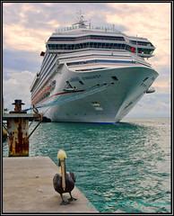 Pelican with a Faulty Gyro (Bob Garrard) Tags: pelican ship key west florida bird birding