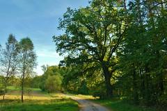 2012-10-02 okolice Loryńca  (130) (aknad0) Tags: polska loryniec krajobraz las drzewa