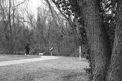 Walk The Dog - Back To Winter (Modkuse) Tags: acros acrossimulation xt2acros fujifilmxt2acrossimulation monochrome bw blackandwhite art artphotography photoart nature natural park dog fujifilm fujifilmxt2 xt2 fujinon fujinonxf1855mmf284rlmois xf1855mmf284rlmois winter
