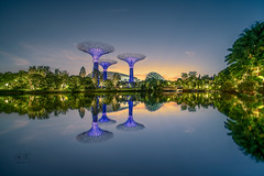 Gardens by the bay super trees, sinapore (GVR Photography) Tags: landscapes singapore reflections nikond850 laowa12mm bluehour