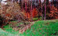 2012-10-02 okolice Loryńca  (138) (aknad0) Tags: polska loryniec informacja krajobraz zdjęcia