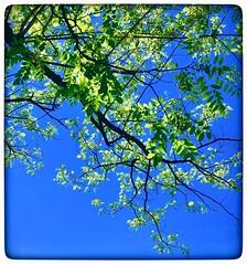 Branch & blue sky 🌌 (vui.la9) Tags: