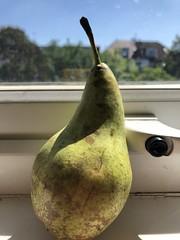 a pear (Hayashina) Tags: pear window sunlight