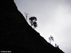 Silhouette of a steep hill (OthmarMarti) Tags: curraldasfreiras dmcg6 lumixgvario14140mmf3556 lumix14140mm madeira prt panasonic pico portugal geo:lat=3272015793 geo:lon=1696583274 geotagged madeiraisland island trees silhouette