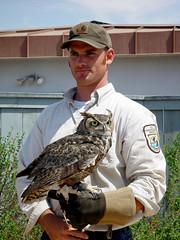 Great Horned Owl - Chula Vista (arlinescottphotography.com) Tags: chula vista marine sanctuary arline scott photography 2004 great horned owl california socal san diego vacation