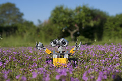 Wall E love flowers! (PLADIR) Tags: walle lego outdoor outside flowers blumen nature natur fun spas spass sony a77 slta77ii rob roboter
