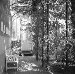 Somerleyton Gardens (nikolaijan) Tags: fuji neopan film 120 somerleyton blackandwhite yashica 124g 6x6 england norfolk iso400