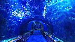 Blue tunnel (gerard eder) Tags: world travel reise viajes europa europe españa spain spanien tunnel valencia oceanografico aquarium acuario blue wasser water
