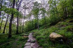 Woodland Path (Glen Parry Photography) Tags: glenparryphotography hebdenbridge landscape calderdale craggs d7000 forest hardcastlecrags landscapephotography nikon nikond7000 nikonphotography nikonphotographer sigma sigma1020mm westyorkshire woodland woods