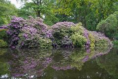 DSC06304 (Photodendron) Tags: ilce7rm3 tiergarten