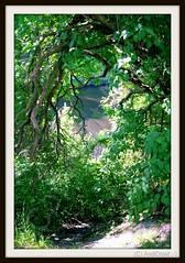 am Teltowkanal / Alle Rechte vorbehalten © AndiDroid ;-) (AndiDroid ;-)) Tags: andidroid foto photo photography photographie natur nature naturephotography naturphotographie licht light grün green baum tree wasser water walkalongtheteltowkanal spaziergangamteltowkanal