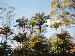 Plants (Matthew Paul Argall) Tags: revuepocket10 fixedfocus 110 110film subminiaturefilm lomographyfilm 200isofilm plasticlens toycamera plant plants