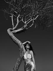 Beauty and the Tree ( MBS-.. ) Tags: gfx fujifilm gfx50r 50r monochrome blackandwhite monochromatic medium format mediumformat nature tree sand dune sharjah fashion fashionable sexy hot