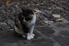 Il Glicine e La Lanterna (Elizabeth Almlie) Tags: italy toscana tuscany vignola agriturismo ilglicineelalanterna cat stone