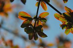Il Glicine e La Lanterna (Elizabeth Almlie) Tags: italy toscana tuscany vignola agriturismo ilglicineelalanterna leaves branches