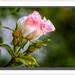 """"""" C'est dans la rosée des petites choses que le cœur trouve son matin et se rafraîchit.  """" Citations"""