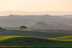 Tuscany (Massimo_Discepoli) Tags: tuscany italy landscape hills green grass shadows tree sunset