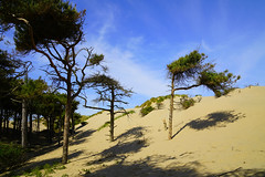 Dali Dunes (JamieHaugh) Tags: formby merseyside liverpool england uk gb britain outdoors sefton nature salvadordali surreal sony alpha zeiss ilce7rm2 a7rii sand dunes trees pines sky blue yellow clouds wood day sunshine sun landscape beach coastal shadows