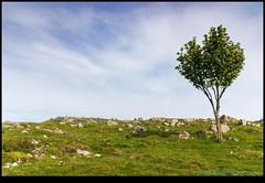 190515-4532-M50.JPG (hopeless128) Tags: fields sky tree wall cheddargorge uk 2019 cheddar england unitedkingdom