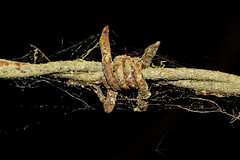Old Wire And Cobwebs (Mark Wasteney) Tags: happywebwednesday hww web cobweb fence barbedwire rusty corroded old