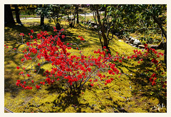 3ème jour / 3rd day - Le jardin d'Isuien / Isuien garden - Nara (christian_lemale) Tags: jardin garden isuien nara japon japan nikon d7100 奈良 日本