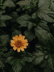 Flower (Astaine Akash) Tags: flower pixel googlepixel pixel2 teampixel shotonpixel macro moody shotonphone googlepixel2xl