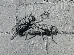 Fly On The Wall (wiredforlego) Tags: graffiti stencil streetart urbanart publicart illegalart dunedin newzealand nz