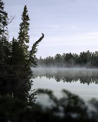 Misty Boundary Waters morning (loewx017) Tags: nature life light dark flickr water mist fog pine dusk dawn sunrise sunset bright color mood moody morning night