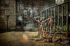 It won't go anywhere anymore. (Sera69) Tags: vélo vieux volé abandonné ville roues chaîne inutilisable attaché grille grillage lyon croixrousse