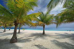Dwarf Coconuts (engrjpleo) Tags: coconutpalms tropical tree portavega beach dimasalang masbate bicolregion philippines landscape seascape sea water waterscape outdoor