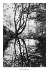 Nutclough Reflections (Rory Prior) Tags: 35mm calderdale hebdenbridge nutcloughwoods rollei35se spring yorkshire bw film fomapan100