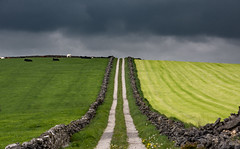 what lies beyond (Phil-Gregory) Tags: peakdistrict peakdistrictderbyshire derbyshire d7200 nikon iamnikon sigma18250macro zoom lane road track wall clouds cloudscape storm field light lightroom cows dales scenicsnotjustlandscapes ngc england picturesque